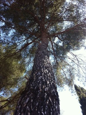 Natur an der Côte d'Azur – schattiger Campingplatz