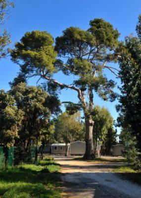 Naturnahe Ferien auf einem Camingplatz - Südfrankreich