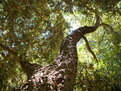 Naturnaher Campingplatz mit Bäumen im Maurengebirge für ruhige Ferien im Grünen
