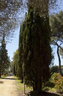 Ökologisch sinnvoll geführter, naturnaher und schattiger Campingplatz in La-Londe-les-Maures - Strände