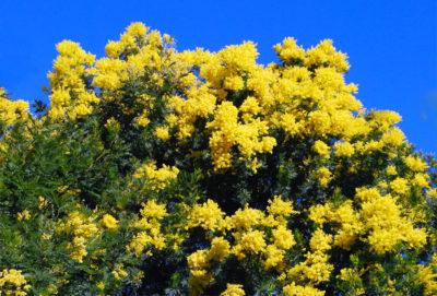 Campingplatz in Bormes-les-Mimosas – naturnahe Ferien mit vielen Blumen