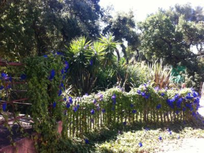 Provence - naturnaher, umweltfreundlicher und schattiger Campingplatz mit vielen Bäumen