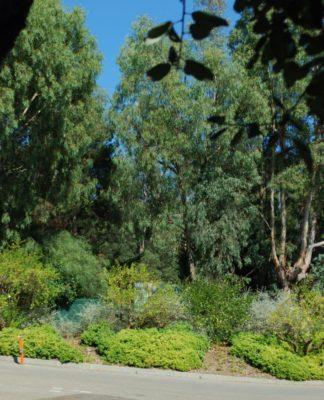Campingplatz in Hyères – Natur und Ökologie, Schatten und Ruhe