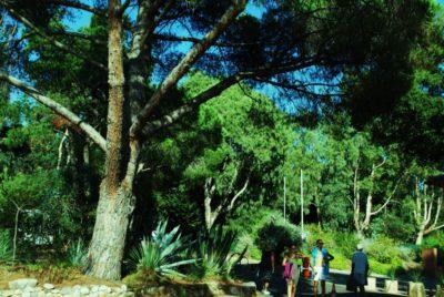 Ferien auf einem naturnahen und schattigen Campingplatz