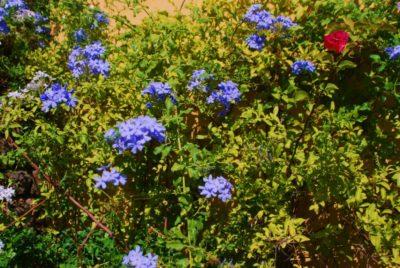 Ökologisch sinnvoll geführter Campingplatz mit vielen Blumen in Südfrankreich