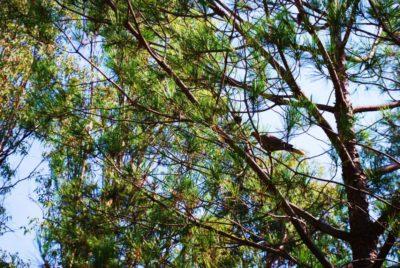 Campingplatz in der Provence – naturbelassener Pinienwald und umweltschonende Pflanzenvielfalt
