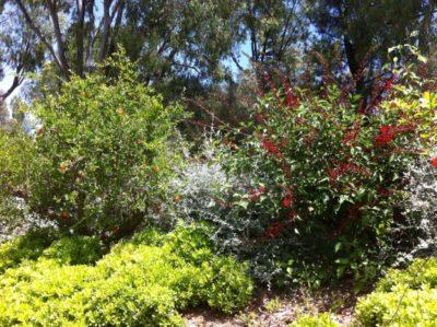 Ökologisch sinnvolle Ferien auf einem umweltfreundlichen Campingplatz - botanischer Lehrpfad