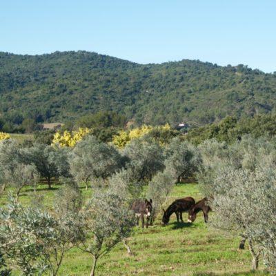 Die Olivenmühle von Haut Jasson
