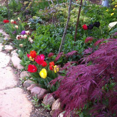 Der botanische Garten Le Réal in Puget-Ville