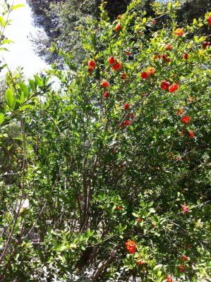 Mediterrane Pflanzen auf einem Campingplatz mit vielen Bäumen